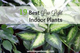 best low light house plants 19 best low light indoor plants sensible gardening and living