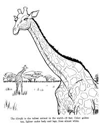 animal drawings coloring pages giraffe animal identification