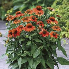 the effortless garden easy low maintenance perennials and