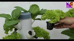 cara membuat cairan hidroponik cara membuat nutrisi khusus untuk tanaman hidroponik bisakah pakai