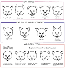 genetic expression of color patterns feline cool stuff