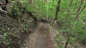 ground path run through greenwood at hillside dense leafy forest