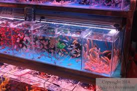 guangzhou huadiwan fish and aquarium market ogles observations