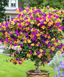 76 best gardening images on pinterest flowers flowers garden