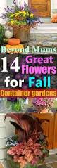 Fall Plants For Vegetable Garden by 14 Great Fall Flowers For Containers Fall Flowers For Pots