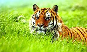 Cool Animal Wallpapers by Free Hd Wild Animal Wallpaper Galleryimage Co