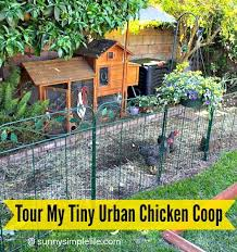 Chickens Backyard 116 Best Chickens And Birds Hk Images On Pinterest Raising