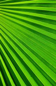 265 best color green verde images on pinterest shades of