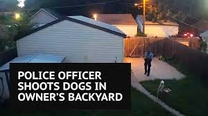 minneapolis police officer shoots two staffordshire bull terriers