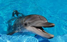 dolphin wallpapers hd group 76