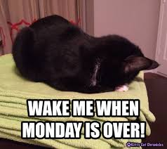 Monday Cat Meme - wake me when monday is over kitty cat chronicles