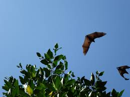 bats in your backyard toronto and region conservation trca