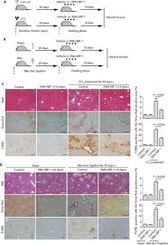 Tissue Renewal Regeneration And Repair Pharmacological Targeting Of Kinases Mst1 And Mst2 Augments Tissue