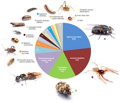 What Are The Red Bugs On Concrete by Arthropods Of The Great Indoors Characterizing Diversity Inside