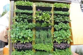 Vertical Wall Garden Plants by Melbourne Flower And Garden Show What U0027s Next On The List