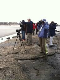 stone harbor avalon nj delmarva ornithological society