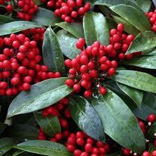 Fragrant Container Plants - 748 best winter garden scents u0026 colors images on pinterest
