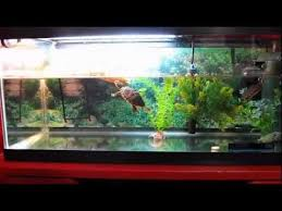 uvb light for turtles new uvb l turtle update reptisun 5 0 youtube