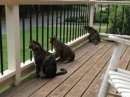 guard cat squad deployed cats