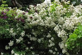 a new season in may u0027s garden in british columbia fine gardening