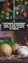 container gardening how to get started with 12 easy plants to grow