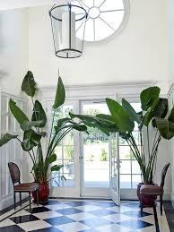 banana plants indoor trees black and white foyer indoor