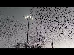 of birds flying away simultaneously ahmedabad railway
