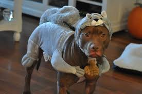 cute dog halloween costumes 50 funny pet costumes 50 pics amazing creatures