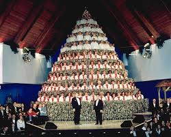a cappella news the singing christmas tree