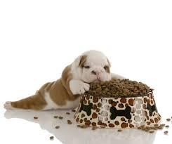 best 25 nutro dog food ideas on pinterest homemade dog food