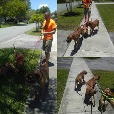 it u0027s a ruff life 20 photos dog walkers miami fl phone