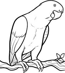 parrot looking for food coloring page download u0026 print online