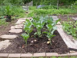 unusual ideas vegetable gardens for beginners contemporary design