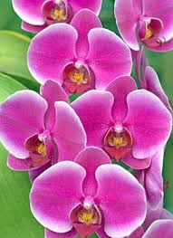 buy an orchid aos beginners newsletter