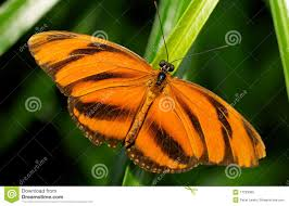 orange black butterfly meaning the best butterfly of 2018