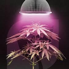 led marijuana grow lights how to use led grow lights for growing cannabis