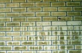 Clean Wall Stains by Masonry Cleaning U0027s Most Unwanted Green Journey