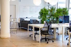 office plants greenery nyc