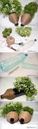 plastic bottle hedgehog planters are adorable plastic bottles
