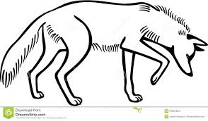 coyote sniffing stock vector image 67055464