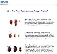 Small Black Bugs In Bed Home Design Engaging Tiny Carpet Bugs Small Black That Jump Bug