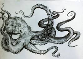 black and white drawing octopus pencil squid street art