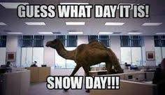 Hump Day Camel Meme - snow day humor google search funny weather pinterest snow
