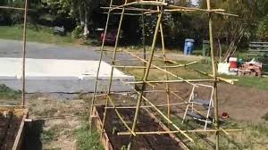 bamboo pea and tomato trellis youtube