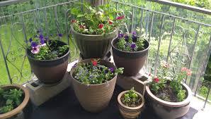 indoor flowering plants plant outdoor plant pot stunning flowering indoor plants full