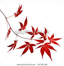 tattoos autumn foliage japanese maple tree leaves acer