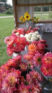 Cut Flower Garden by U Pick Flowers U2014
