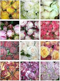Flowers Wholesale Valley Fresh Flowers Wholesale In Coffs Harbour Nsw 2450 Local
