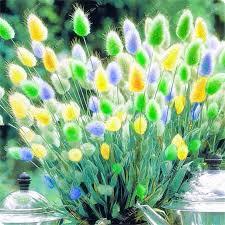 vente en gros potted ornamental grass galerie achetez à des lots