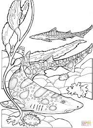 leopard sharks coloring page free printable coloring pages